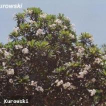 Zdj. nr 3;Zdjęcie wykonane w Kenii.