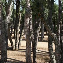Zdj. nr 6;Zdjęcie wykonane w Hiszpanii