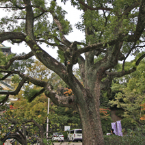 Zdj. nr 3;Zdjęcie wykonane w Japonii.