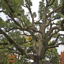 Zdj. nr 2;Zdjęcie wykonane w Japonii.