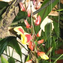 Zdjęcie wykonane w Pradze - Ogród Botaniczny Troja