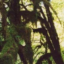 Zdj. nr 6;Zdjęcie wykonane w USA.