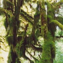 Zdj. nr 7;Zdjęcie wykonane w USA.