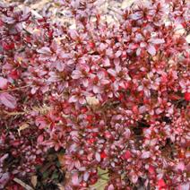 Zdj. nr 3;Liście jesienią