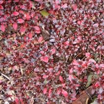 Zdj. nr 2;Liście jesienią