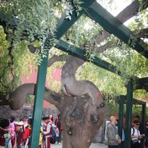 Zdj. nr 15;Zdjęcie wykonane w Pekinie