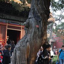 Zdjęcie wykonane w Pekinie