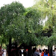 Zdj. nr 17;Zdjęcie wykonane w Pekinie
