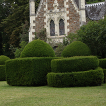 Taxus baccata 13