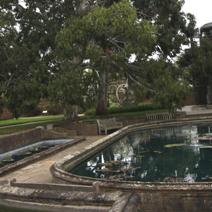 Zdj. nr 4Basen dla roślin wodnych, w głębi Eukaliptus.