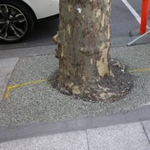 Zdj. nr 3;Zabezpieczenie drzew na chodnikach