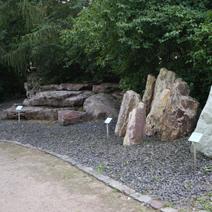 Zdj. nr 52;Kamienie - minerały i skamieliny drzew