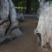 Zdj. nr 58;Kamienie - minerały i skamieliny drzew