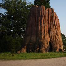 Zdj. nr 60;Kamienie - minerały i skamieliny drzew