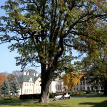 Zdj. nr 37;Park i ogród jesienią