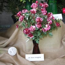 Zdj. nr 44;Święto Róż w Końskowoli 14.07.2019 r.