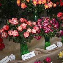 Zdj. nr 45;Święto Róż w Końskowoli 14.07.2019 r.