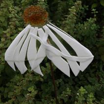 """Zdj. nr 31;""""Kwiat"""" - Pęchcin"""