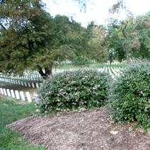 Zdj. nr 5;Cmentarz wojskowy w Arlington - USA
