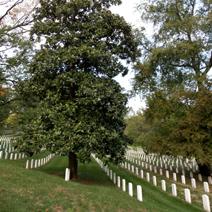 Zdj. nr 6;Cmentarz wojskowy w Arlington - USA