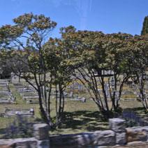 Zdj. nr 9;Cmentarz w Australii