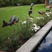 """Zdj. nr 73;""""Latające ryby"""" - Hillier Gardens"""