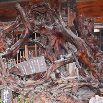 Zdj. nr 137;Fragment pogiętego drzewa