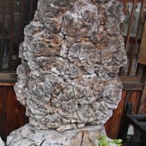 Zdj. nr 139;Fragment drzewa