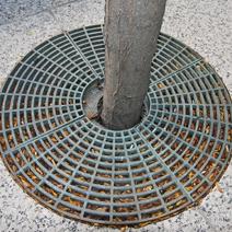 Zdj. nr 6;Zabezpieczenie bryły korzeniowej na chodniku