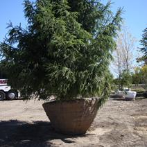 Zdj. nr 4Sadzenie drzew i krzewów