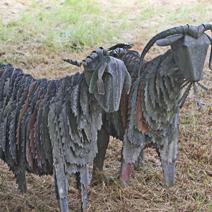 """Zdj. nr 181;""""Owce na pastwisku"""""""