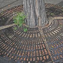 Zdj. nr 4;Osłona korzeni drzewa na ulicy