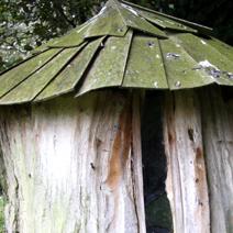 Zdj. nr 252;W ogrodzie p. Harriet Tapper w Leigh Delamere - Anglia.