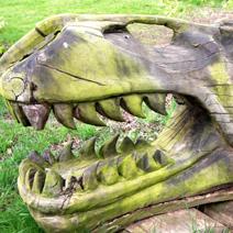 Zdj. nr 253;W ogrodzie p. Harriet Tapper w Leigh Delamere - Anglia.