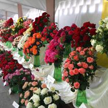 Zdj. nr 20;Święto Róż w Końskowoli w 2014 roku