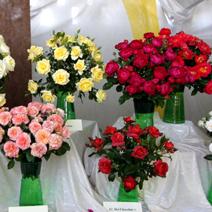 Zdj. nr 22;Święto Róż w Końskowoli w 2014 roku