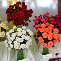 Zdj. nr 21;Święto Róż w Końskowoli w 2014 roku