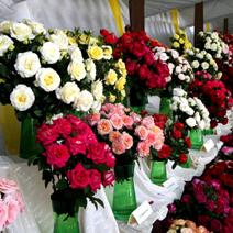 Zdj. nr 18;Święto Róż w Końskowoli w 2014 roku