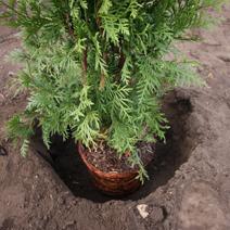 Zdj. nr 5Sadzenie drzew i krzewów