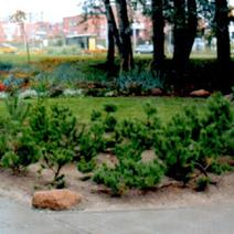 Zdj. nr 4;Polska Szkoła im. J.Pawła II w Wilnie - październik 2003 rok.