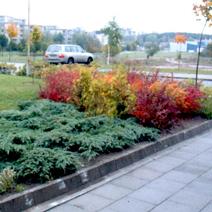 Zdj. nr 5;Nasze nasadzenia przy Polskiej Szkole im. J.Pawła II w Wilnie w październiku 2003 roku