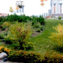 Zdj. nr 8;Nasze rośliny przy Polskiej Szkole im. J.Pawła II w Wilnie w październiku 2003 roku