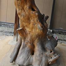 Zdj. nr 150;Zniekształcone drzewo