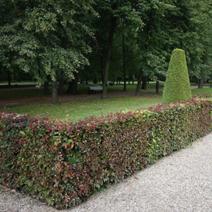 Zdj. nr 4;Fragment parku.
