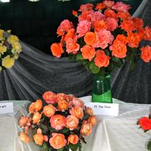 Zdj. nr 13;Święto Róż w Końskowoli w 2012 roku