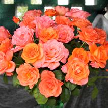 Zdj. nr 12;Święto Róż w Końskowoli w 2012 roku