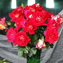 Zdj. nr 15;Święto Róż w Końskowoli w 2012 roku