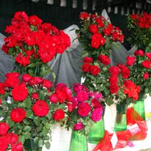 Zdj. nr 16;Święto Róż w Końskowoli w 2012 roku