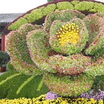 Zdj. nr 105;Rzeźba kwiatowa - Pekin