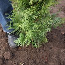 Zdj. nr 6Sadzenie drzew i krzewów